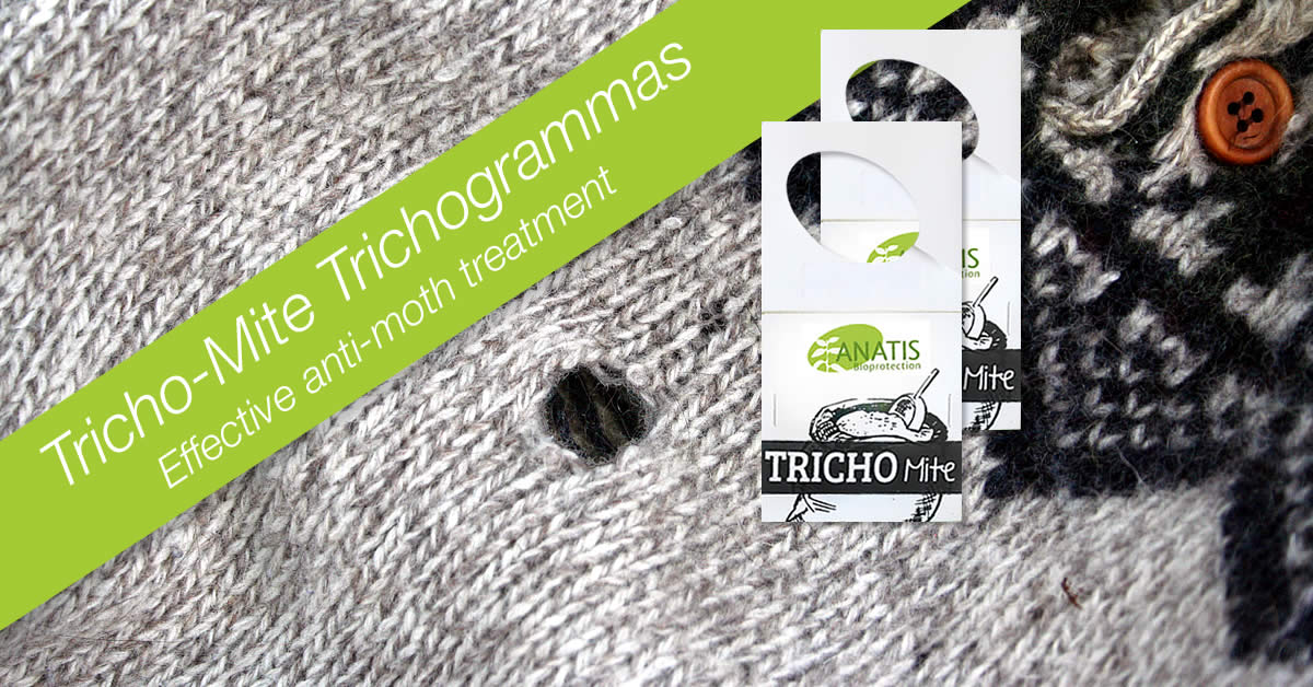 Clothes Moths How To Get Rid Of It With Trichogrammas