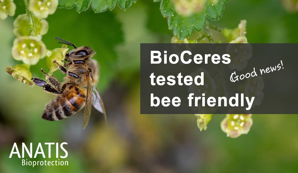 BioCeres bee friendly